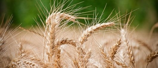 Informacja dla rolników – straty w uprawach