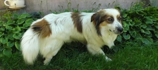 Znaleziono psa w miejscowości Krężnica Jara – 25.06.2019 r.