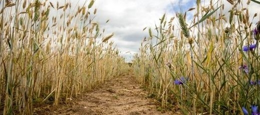 Wydłużenie terminu składania wniosków suszowych - do 12.08.2019 r.